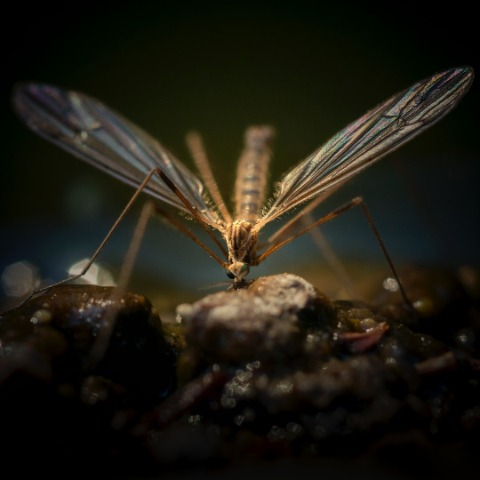 chicago mosquito pest control solutions