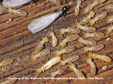 termite pest control solutions, New Lenox, Frankfort, Joliet, Homer Glen IL